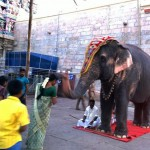 Edith - Blog Foto - Elefant IndienMalediven-Reise etc. 2014 1296