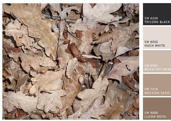 Edith - Herbstbilder Blätter 2 EtmpSnapShot