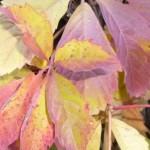 mode fair produziert Herbstfarben