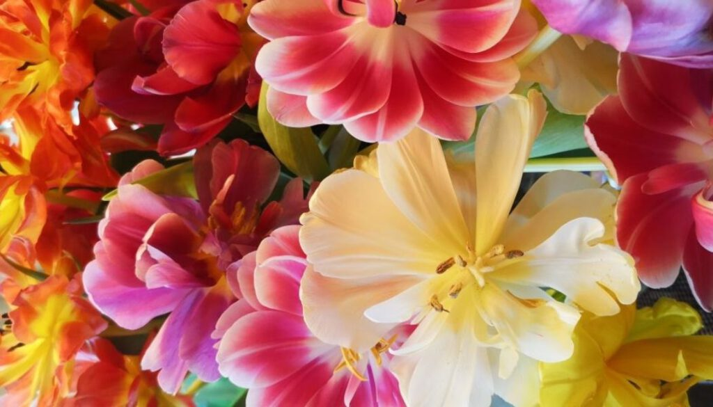 Joyvita Röcke mit Blumen